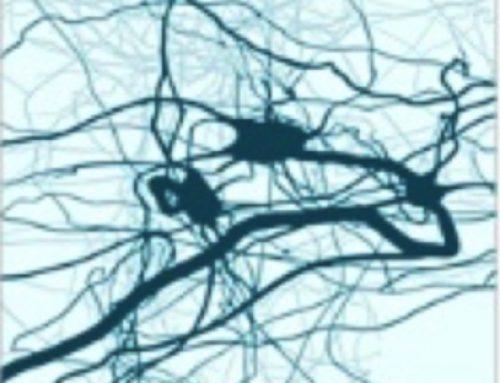 Hersengymnastiek en neurale plasticiteit